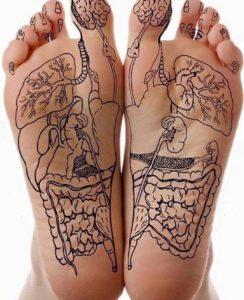 zones réflexes illustrées pieds