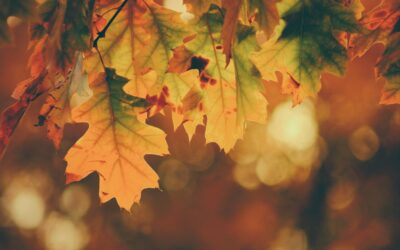 Voilà l'automne